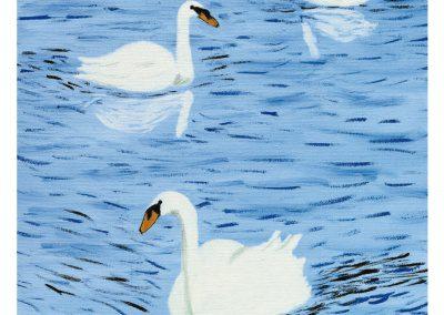 EP162 Cisnes